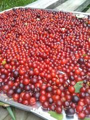 vegetable(0.0), plant(0.0), zante currant(0.0), pink peppercorn(1.0), berry(1.0), frutti di bosco(1.0), produce(1.0), fruit(1.0), food(1.0),