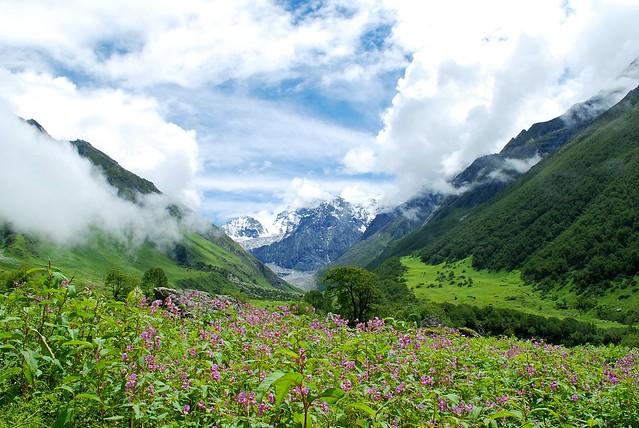 El Valle De Las Flores El Himalaya La India Hominia