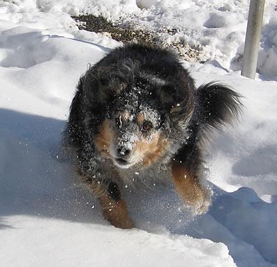 Yarndog2