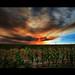 Smokey Skys by PT Photo