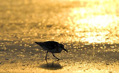 beach sunrise reflections nc obx mattsmith wavesnc phototriad