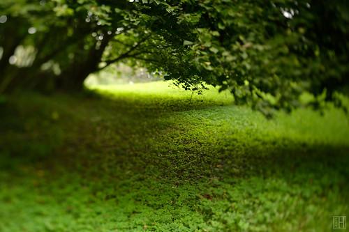 trees shadow summer green texture nature rain landscape geotagged movement focus ground illusion lie liechtenstein tilt shamrock shallowdepthoffield cloverleaf underthetree schellenberg tiltshiftlens scheimpflugrule hinterschellenberg geo:lat=4723542388 geo:lon=955929612 nikonpcenikorr45mmf28d