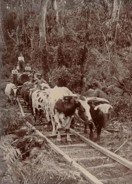 1902 in New Zealand