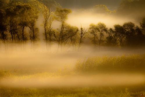 fog morninglight pennsylvania sept11 backlighting chestercounty canonef100400mmf4556lisusm newlintownship naturallandstrust canoneos5dmkii summer2010 cheslenpreserve