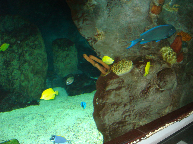 Mall Of America Aquarium 37 Flickr Photo Sharing