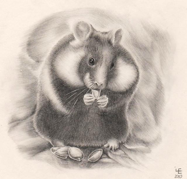 Wild hamster (winner of Zverek'09.2010)