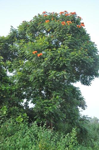2010 10_2 Narsapur Forest Reserve