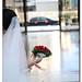 20101001_明憲資雯婚禮紀實