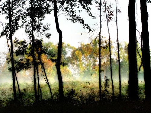 mist fog woods meadow clearing 2010 dmk