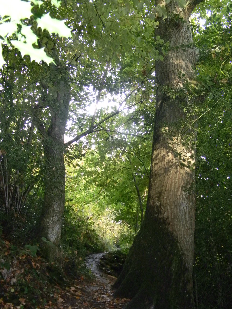 Path Ashurst short circular