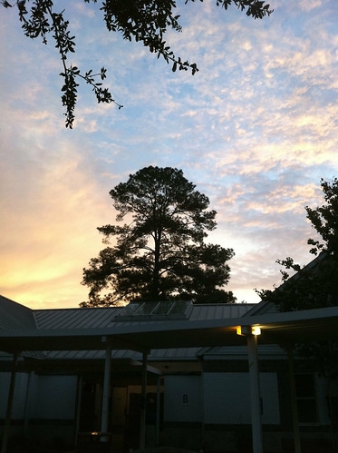 school tree nature sunrise dawn florida north courtyard leon academia tallahassee complex maclay