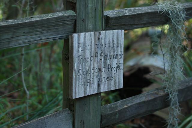 Susan's Photo shoot @ at Skidaway Island State park(361)