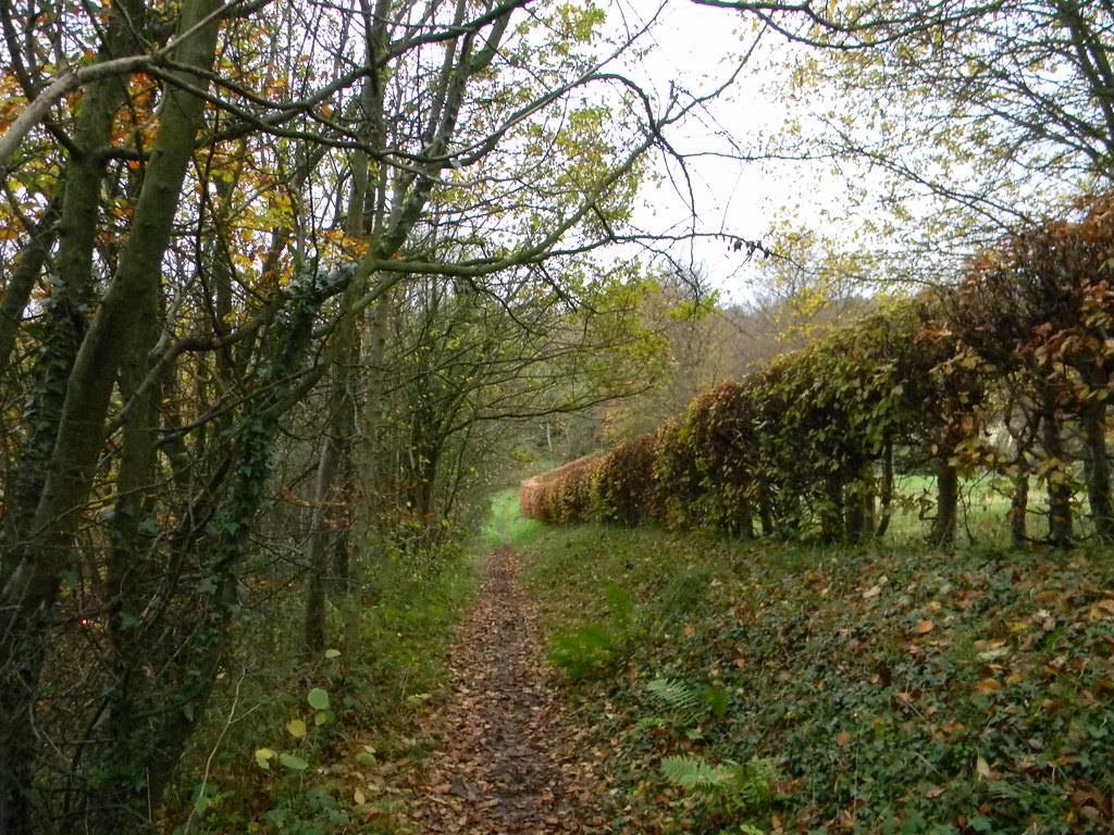 Autumn hedge Edenbridge Town to Westerham