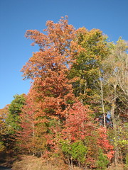 Autumn Colors Lake Crabtree NC 0450