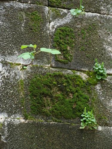 La pared de la vida 2