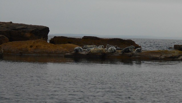 More seals at Bird Island, Big Bras d'Or