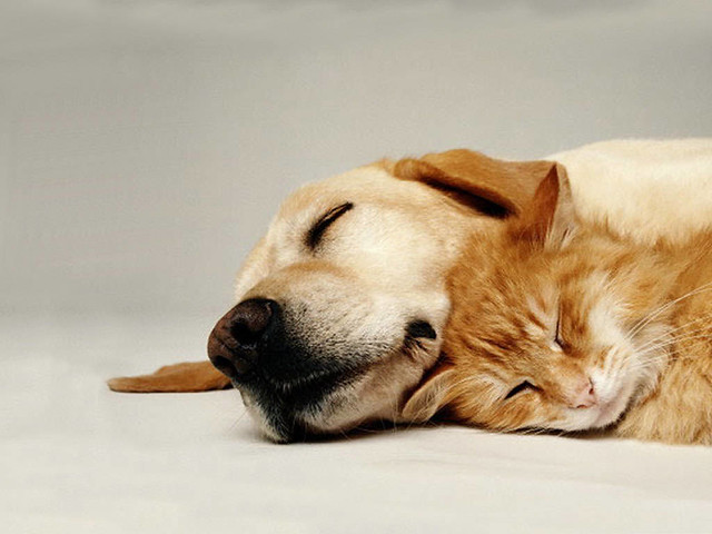 cat_dog_sleep