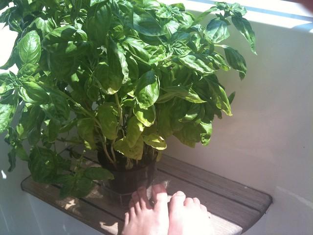 basil feet.