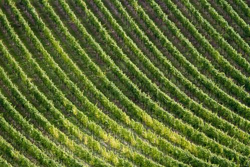 Vines - Rob Hudson (Dorking CC)