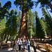 Photographers at Base of General Sherman Tree by howardignatius