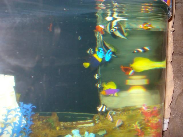 Mall Of America Aquarium 40 Flickr Photo Sharing