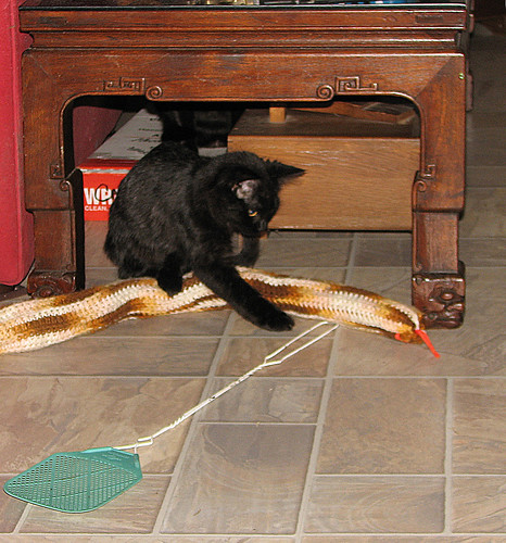 animal cat us texas hiding yoakum flyswater