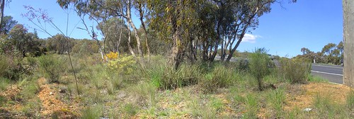Napoleon Reef, Great Western Highway, NSW