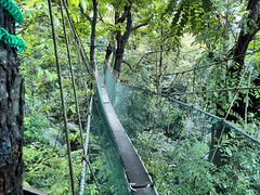 trail(0.0), ravine(0.0), woodland(1.0), rainforest(1.0), suspension bridge(1.0), tree(1.0), canopy walkway(1.0), old-growth forest(1.0), forest(1.0), rope bridge(1.0), natural environment(1.0), jungle(1.0), bridge(1.0),