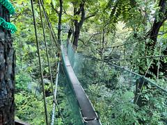 woodland, rainforest, suspension bridge, tree, canopy walkway, old-growth forest, forest, rope bridge, natural environment, jungle, bridge,