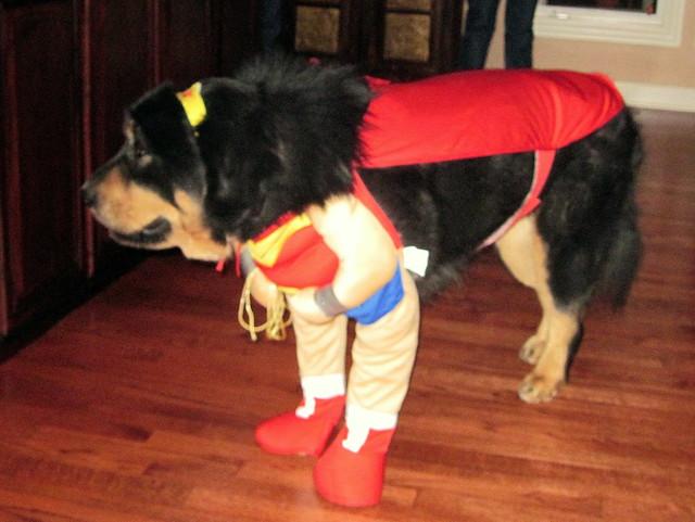 Sagua Wonder Dog 20101008