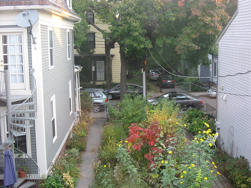 Cambridgeport Fall Garden