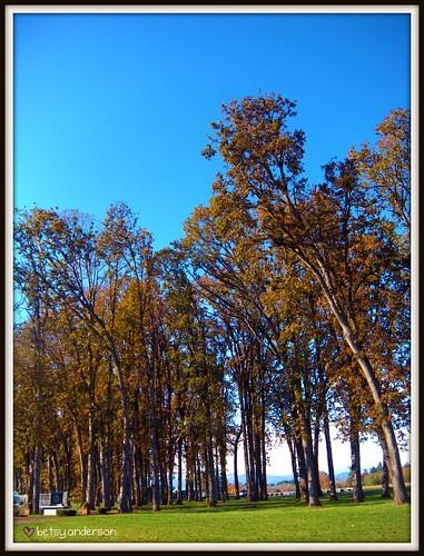 autumn trees fall landscape picnik autumntrees