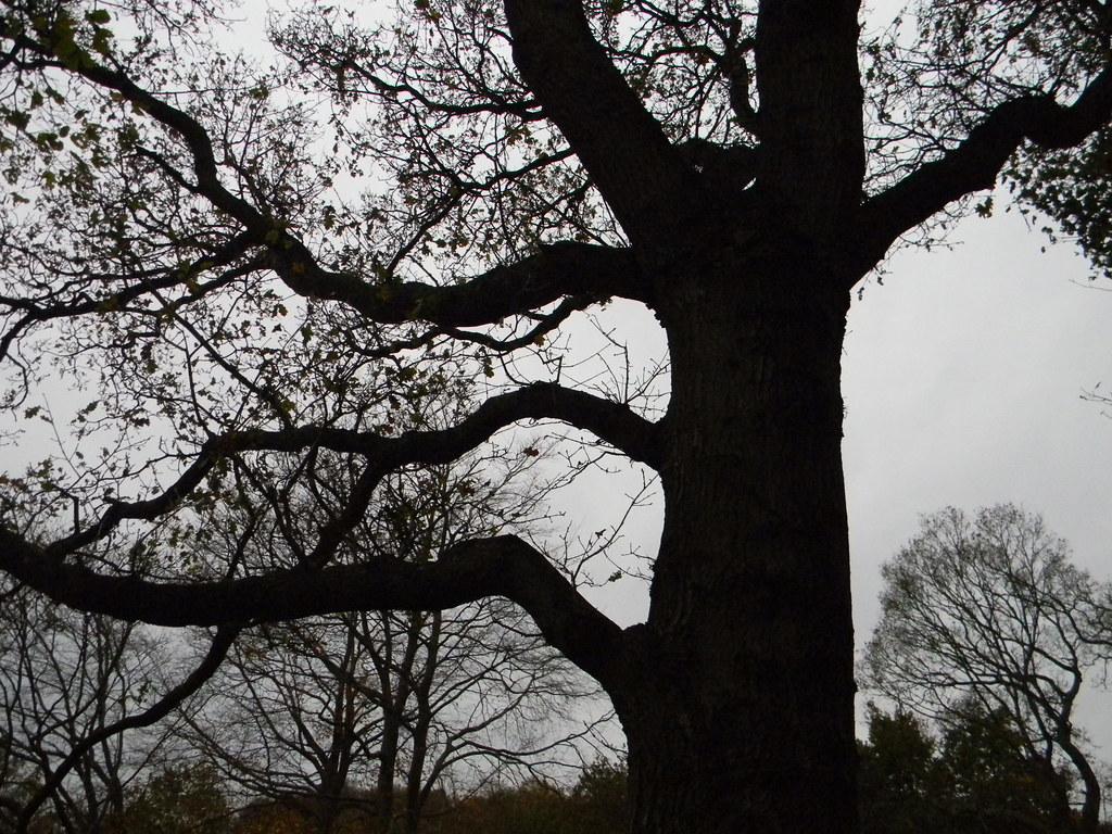 Tree silhouette Edenbridge Town to Westerham