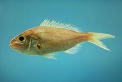fish4412