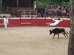 performing arts(0.0), animal sports(1.0), cattle-like mammal(1.0), bull(1.0), event(1.0), tradition(1.0), sports(1.0), bullring(1.0), entertainment(1.0), matador(1.0), performance(1.0), bullfighting(1.0),