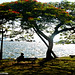 Um pequeno descanso.. by nikkipride
