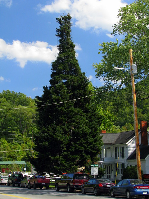 World's Tallest (decorated) Fraser Fir Tree