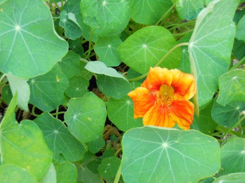 Plantas para elaborar abonos e insecticidas ecológicos