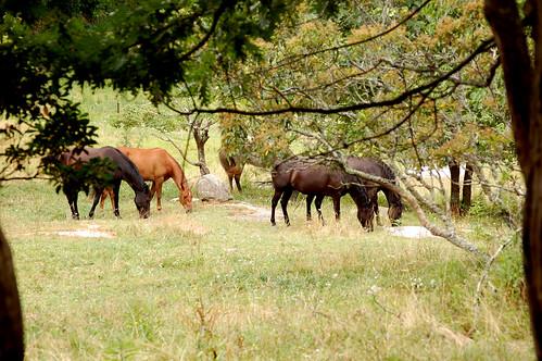 horses tom landscape virginia nikon outdoor rugby va d40