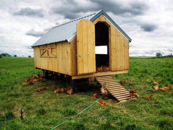 Chicken tractor portable chicken coop flickr photo for Small portable chicken coop