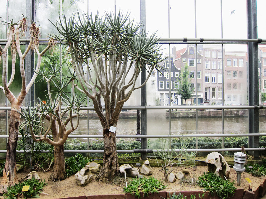 jardin botanique hortus botanicus amsterdam waterlooplein vanupied. Black Bedroom Furniture Sets. Home Design Ideas