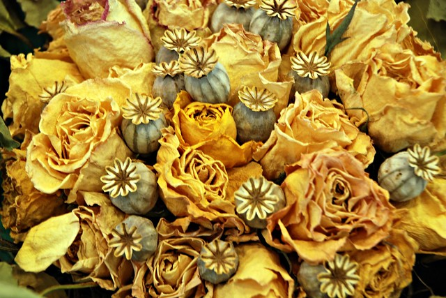 dry flowers, yellow roses and poppy seed pods 1 4x6 bp