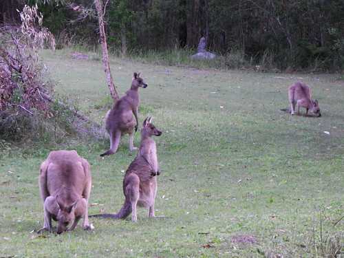 Roos Grazing