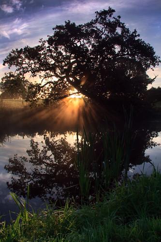 mist sunrise canals devon tiverton grandwesterncanal