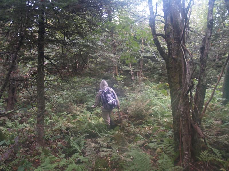 Bushwhacking on the summit plateau of Sherrill