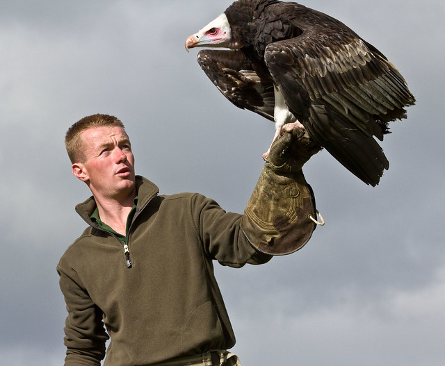 David with the White Headed Vulture