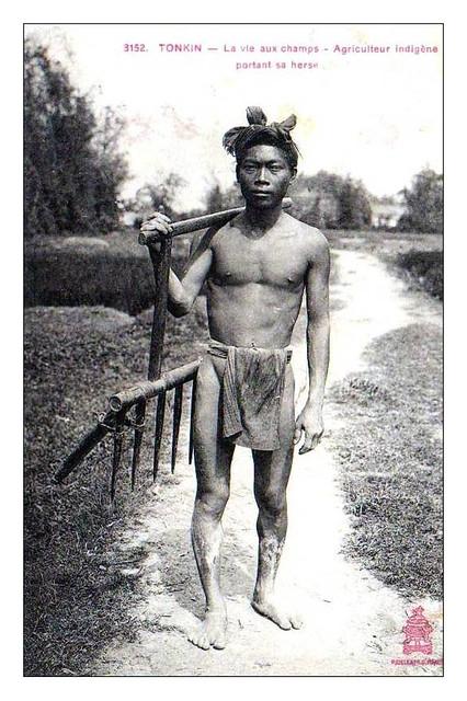 Tonkin - Agriculteur Indigène portant sa herse