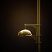 The Westside Armadillo at Night by Mark Luethi