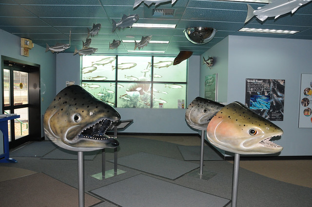 Nimbus fish hatchery visitor center nimbus visitor for California fish hatcheries