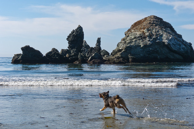 Big Sur Dog Friendly